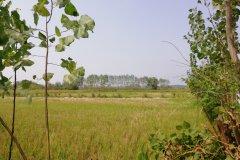 زمین باغی اقدام به مسکونی
