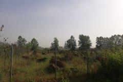 زمین باغ هکتاری
