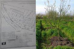 زمین و گلخانه در لاهیجان