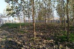 زمین مسکونی و باغ روستای کشل آزادسرا