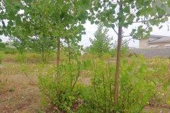 زمین جنگلی مسکونی