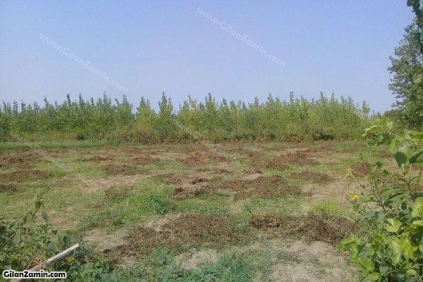 زمین باغ صیفی بادام زمینی
