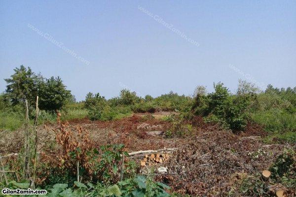 زمین باغ صیفی کاری
