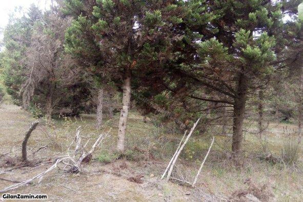 درختکاری زمین