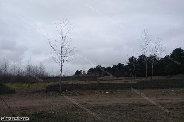 زمین چسبیده به جنگل کاج