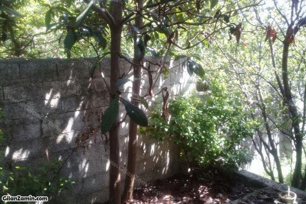 حیاط و فضای سبز